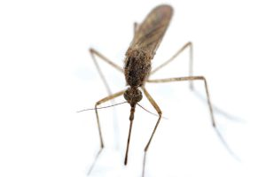 Tips To Ward Off Summer Bugs